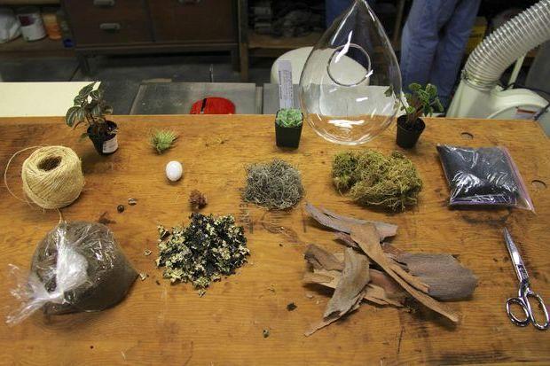 Делаем домашний флорариум своими руками