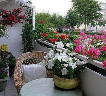 Балконне різнобарв'я 8