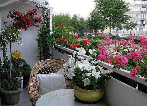 Балконне різнобарв'я 4