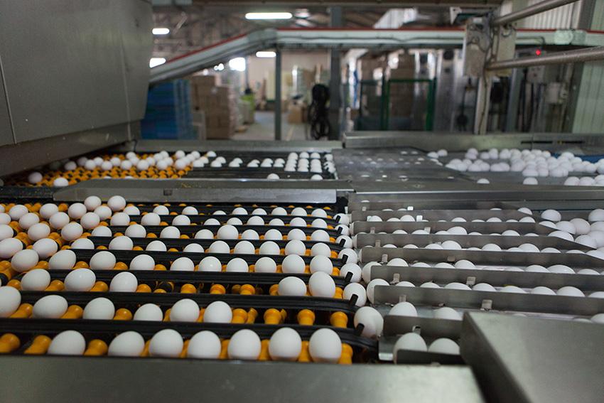 «Овостар Юніон» планує побудувати нові птахофабрики і пташники