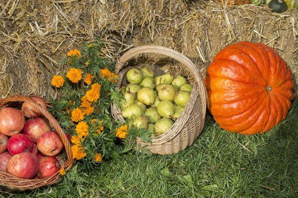 Осень в саду. Часть I