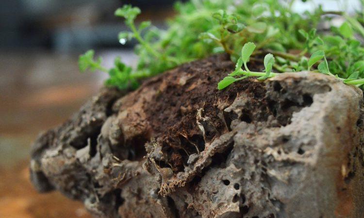 Древесный уголь — новый материал для кирпичей 1
