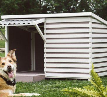 Дизайнерська будка: будинок мрії для чотириногого улюбленця 6