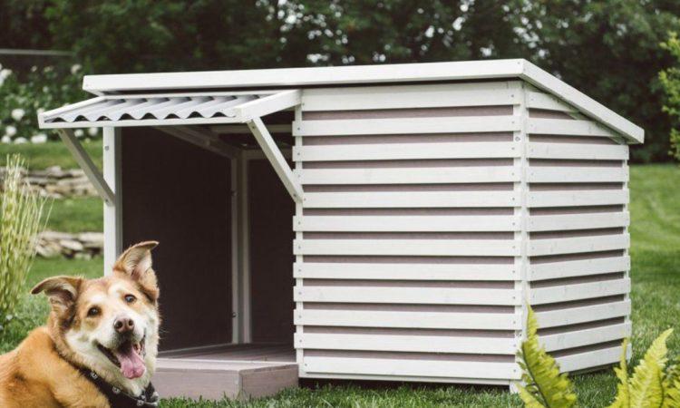 Дизайнерская будка: дом мечты для четвероногого любимца 1