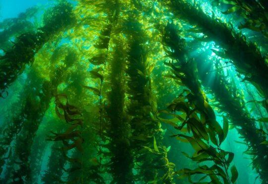 Биотопливо Marine BioEnergy (Біопальне Marine BioEnergy)