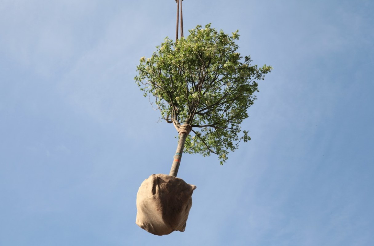 Посадка деревьев (Посадка дерев)