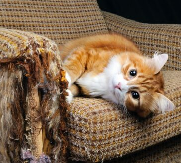 Как отучить кота драть обои и мебель. Як відучити кота дерти шпалери і меблі